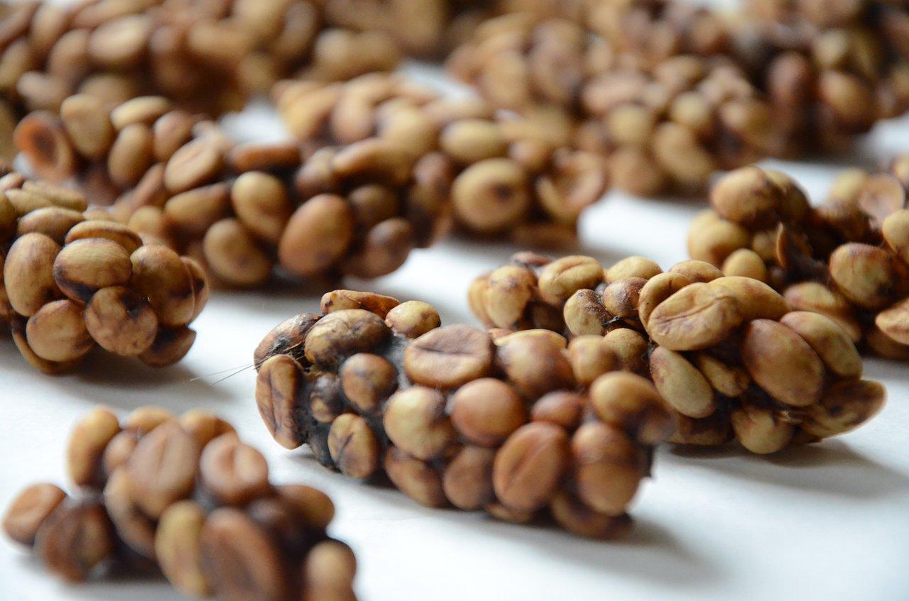 廣圖麝香猫咖啡