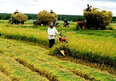 越南農業吸引新加坡投資商