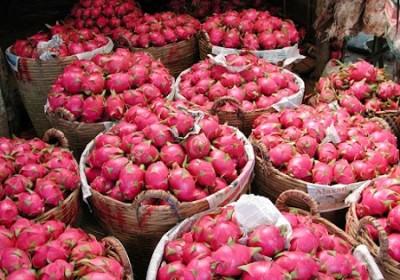 获得5星评级的越南火龙果颇受澳大利亚市场欢迎