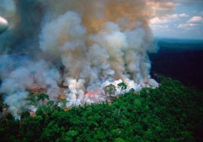 地球之肺起火!亞馬遜雨林燒不停全球遭殃